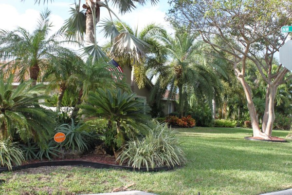 Shadow wood in Coral Springs