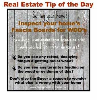 Inspect your home's Fascia Boards for WDO'S
